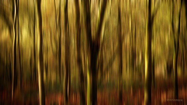 Tree abstract - Michelle Whitmore Artist